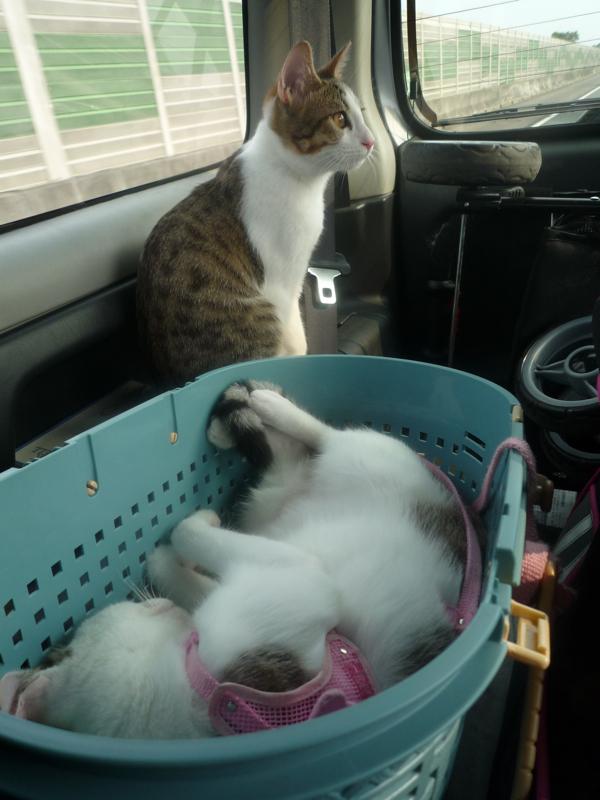 小昭睡到四腳朝天.jpg