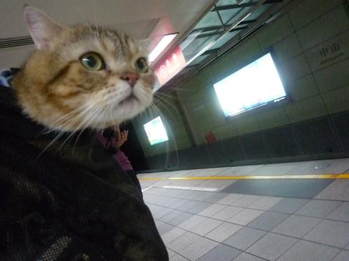 等捷運.jpg