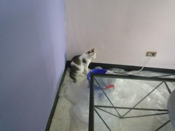 小貓咪也能輕鬆監工