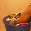 JD大叫說Naomi洗澡的樣子好可愛