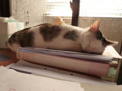 小昭睡著了.jpg