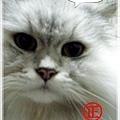 GucciCat3.jpg