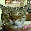 有貓拍拍 - 你醉寶貝2.JPG