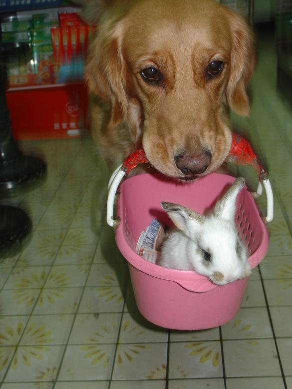 仔仔狗 and 小兔子 散步去