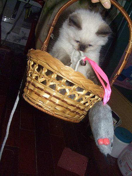 貓就是愛老鼠