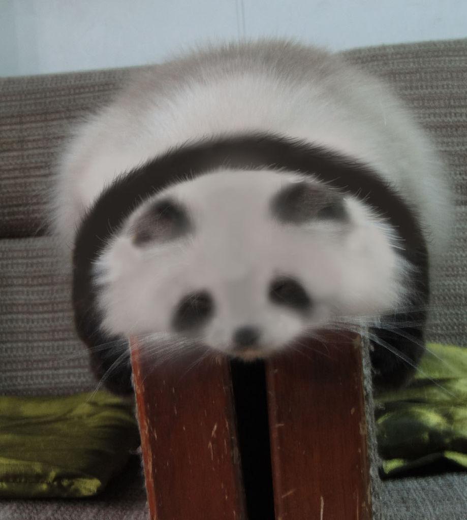 panda拷貝~.jpg