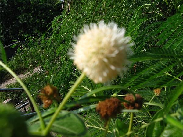 順承門旁的不知名花