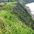 崖上的仙人掌