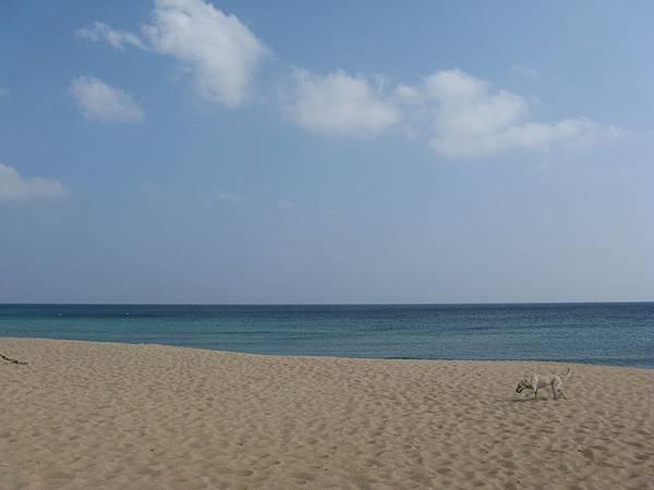狗悠閒地走過眼前的山水沙灘