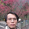 櫻花前自拍