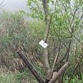 樹上有編號,正在下山的人說看到一就到了