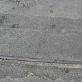 另一股已被柏油覆蓋的鐵軌