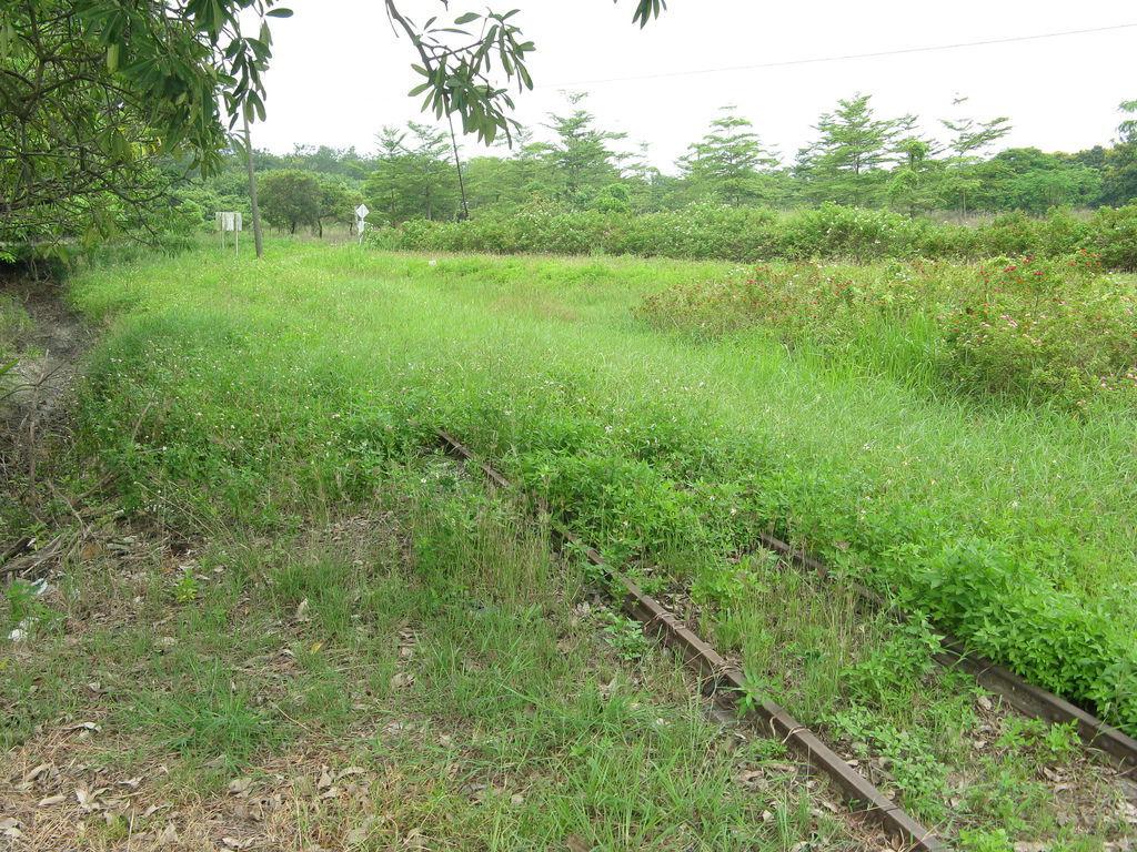 鐵軌裡的草長的有點高了