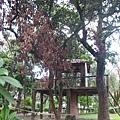 封起來的樹屋