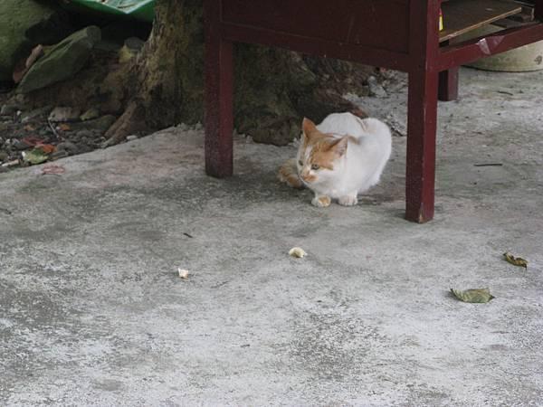 小路裡的貓