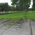 淹沒在草業中的舊鐵軌