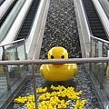 中央公園站瀑布造景的黃色小鴨