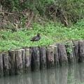 西溪國家濕地公園