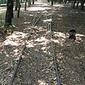 森林中的轉轍器
