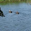 羅東林場生態池