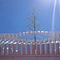 駁二天空樹