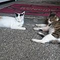 店門口慵懶的貓