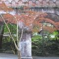 南禅寺裡的一棵小紅葉