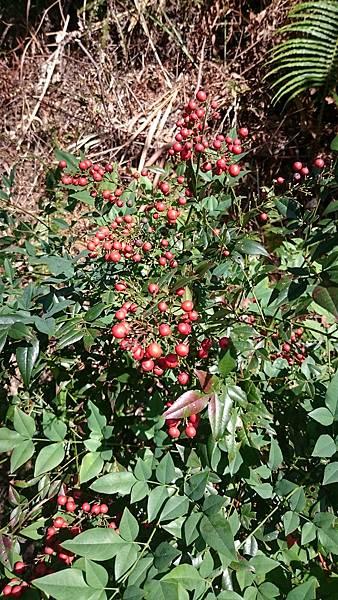 文山農場入口的植物