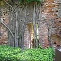 藏身在樹氣鬚後的疑似古城門