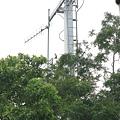 停在電線桿上一直鳴叫的不明鳥類