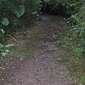 「親山」步道?