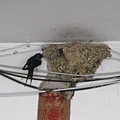 木柵站外民房上的鳥巢