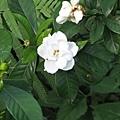 不明花朵1