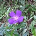 不明花朵2-2