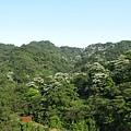 山上的桐花8