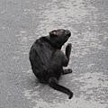 巧遇的街貓