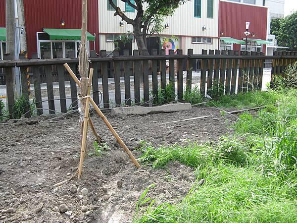 舊線已埋在樹下了…