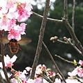 蜜蜂採蜜 3