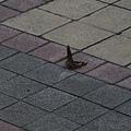 在地上飛舞的蝴蝶