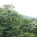 賞桐平台遠眺 4