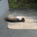 路過的貓 1