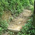 踏雪小徑看來是山路,時間根本不夠的狀況下就沒往上走了,反正也沒桐花了…