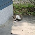 路過的貓 2