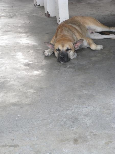 慵懶的狗躺在車站大廳