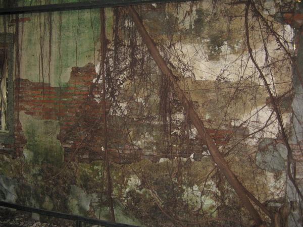 安平樹屋裡的樹 3