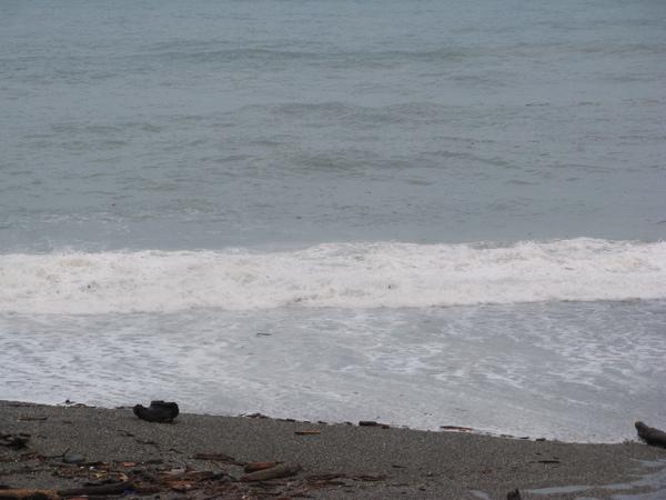 海邊仍見到許多漂流木