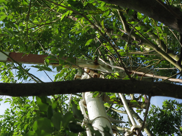 臂木式號誌機上方已經藏在樹林裡了