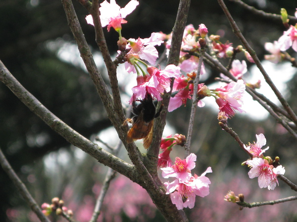蜜蜂採蜜 2