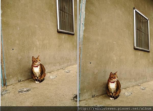 貓1.jpg