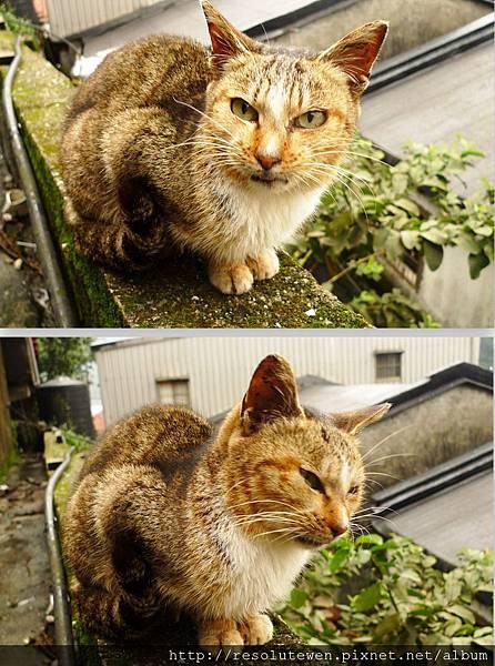 貓8.jpg